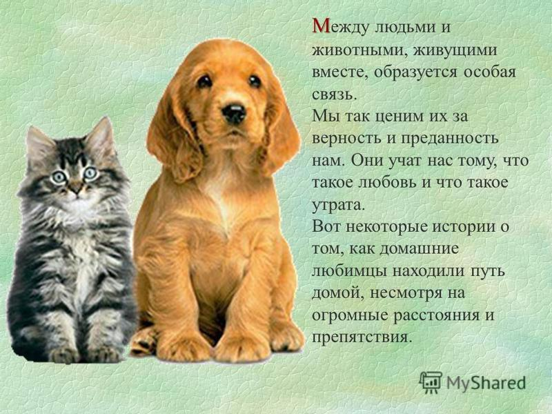 М М ежду людьми и животными, живущими вместе, образуется особая связь. Мы так ценим их за верность и преданность нам. Они учат нас тому, что такое любовь и что такое утрата. Вот некоторые истории о том, как домашние любимцы находили путь домой, несмо