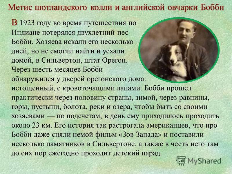 В В 1923 году во время путешествия по Индиане потерялся двухлетний пес Бобби. Хозяева искали его несколько дней, но не смогли найти и уехали домой, в Сильвертон, штат Орегон. Через шесть месяцев Бобби обнаружился у дверей орегонского дома: истощенный
