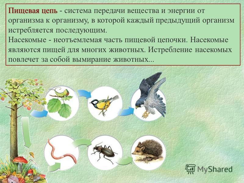 Пищевая цепь Пищевая цепь - система передачи вещества и энергии от организма к организму, в которой каждый предыдущий организм истребляется последующим. Насекомые - неотъемлемая часть пищевой цепочки. Насекомые являются пищей для многих животных. Ист