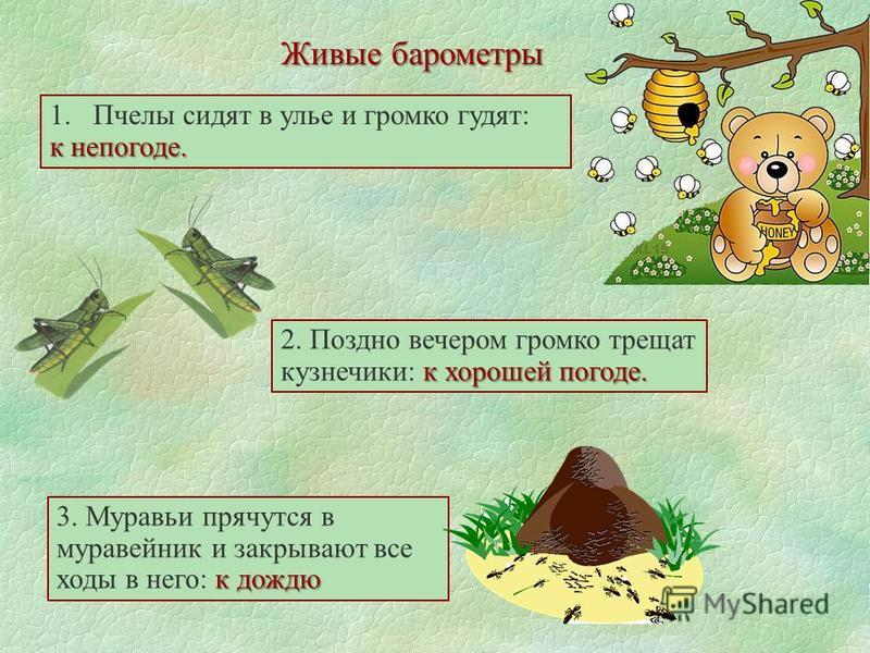 Живые барометры 1. Пчелы сидят в улье и громко гудят: к непогоде. к дождю 3. Муравьи прячутся в муравейник и закрывают все ходы в него: к дождю к хорошей погоде. 2. Поздно вечером громко трещат кузнечики: к хорошей погоде.