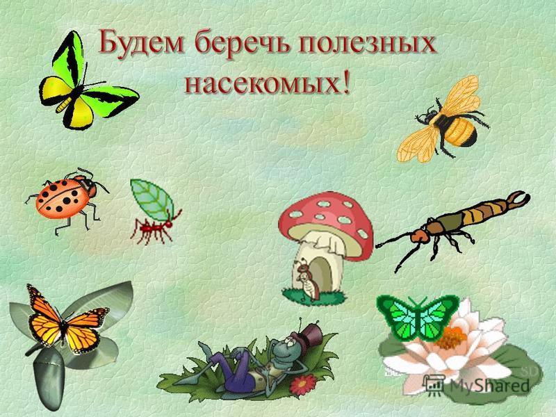 беседа насекомыми знакомство с