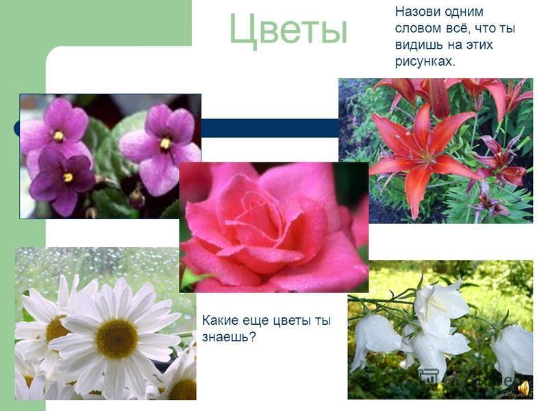 Овощи Что ты видишь на этих картинках? Назови все предметы одним словом. Что делают из овощей? Назови овощи круглой формы?