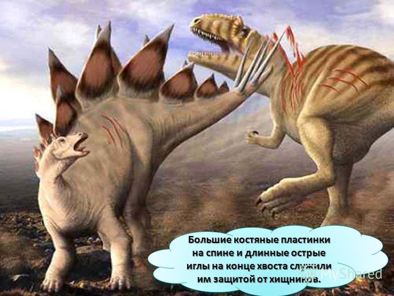 Большие костяные пластинки на спине и длинные острые иглы на конце хвоста служили им защитой от хищников.