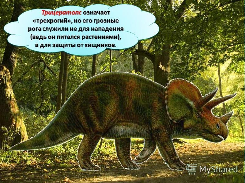 Трицератопс означает «трехрогий», но его грозные рога служили не для нападения (ведь он питался растениями), а для защиты от хищников Трицератопс означает «трехрогий», но его грозные рога служили не для нападения (ведь он питался растениями), а для з