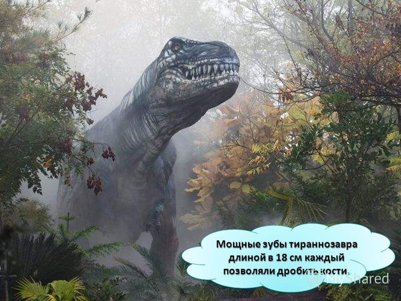 Мощные зубы тираннозавра длиной в 18 см каждый позволяли дробить кости.