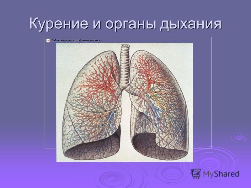 Курение и органы дыхания