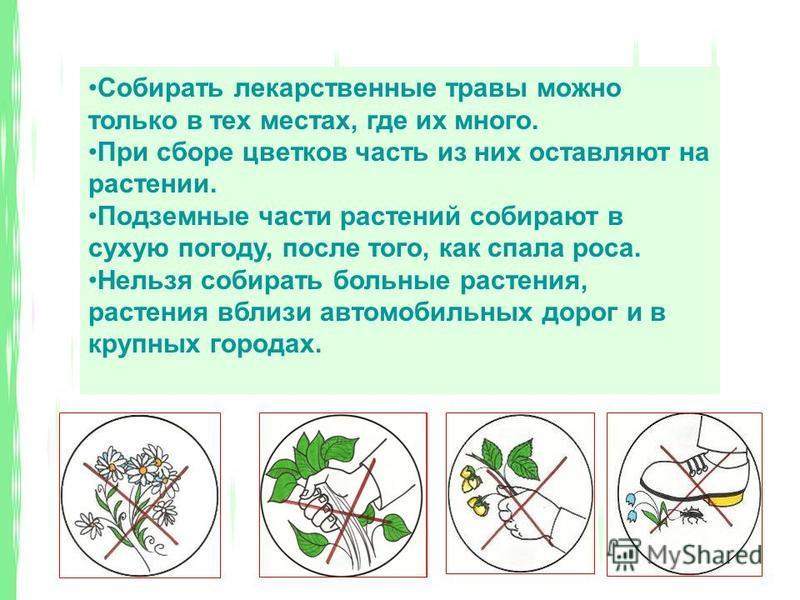 Собирать лекарственные травы можно только в тех местах, где их много. При сборе цветков часть из них оставляют на растении. Подземные части растений собирают в сухую погоду, после того, как спала роса. Нельзя собирать больные растения, растения вблиз