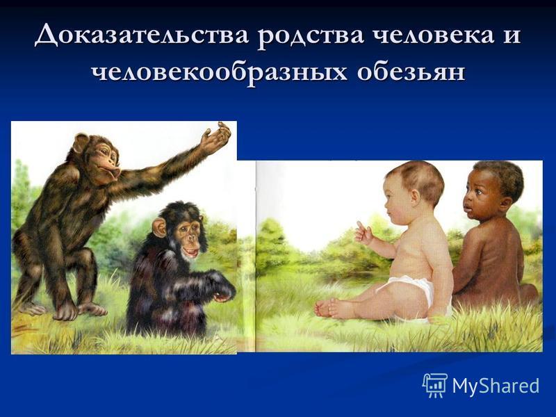 Доказательства родства человека и человекообразных обезьян