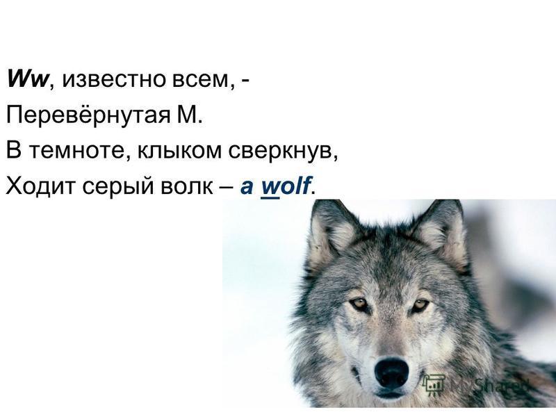 Ww, известно всем, - Перевёрнутая M. В темноте, клыком сверкнув, Ходит серый волк – a wolf.
