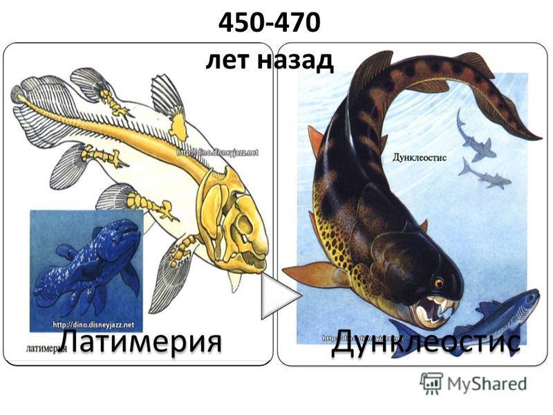 Латимерия Дунклеостис 450-470 лет назад