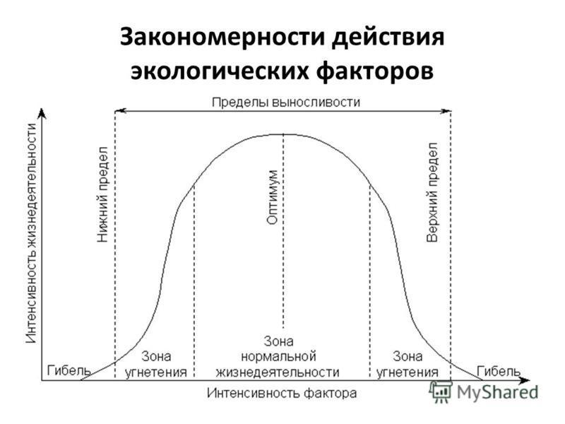 Закономерности действия экологических факторов