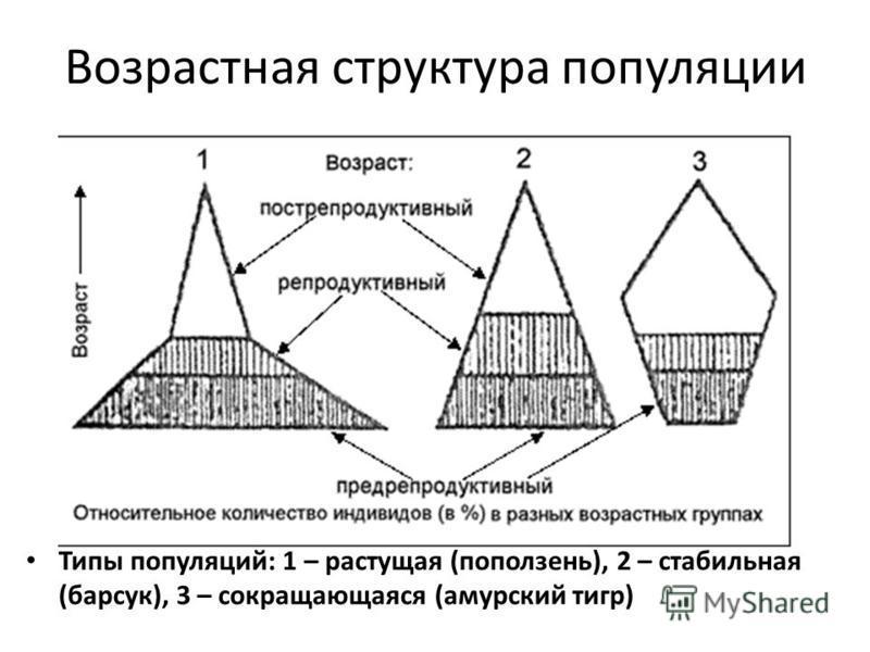 Возрастная структура популяции Типы популяций: 1 – растущая (поползень), 2 – стабильная (барсук), 3 – сокращающаяся (амурский тигр)