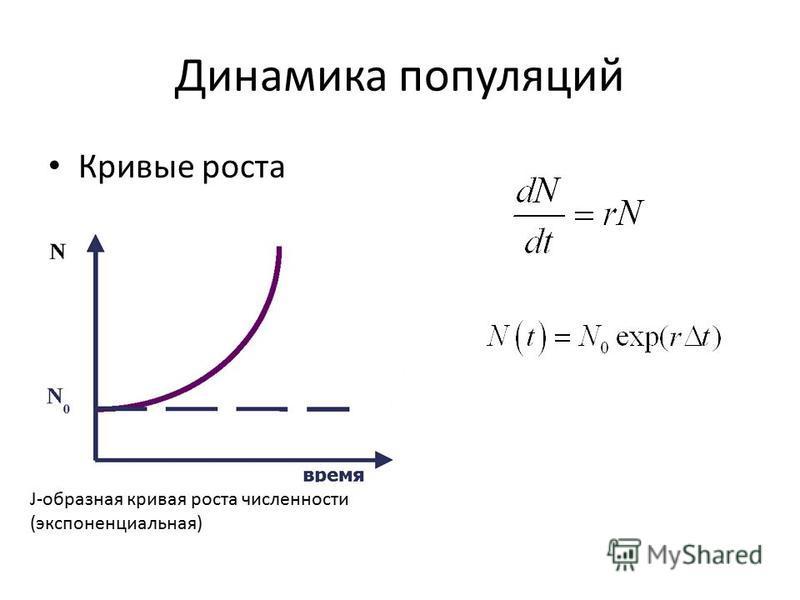 Динамика популяций Кривые роста J-образная кривая роста численности (экспоненциальная)