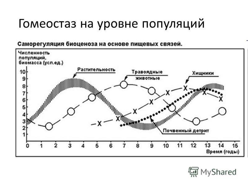 Гомеостаз на уровне популяций
