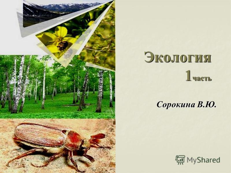 Экология 1 часть Сорокина В.Ю.
