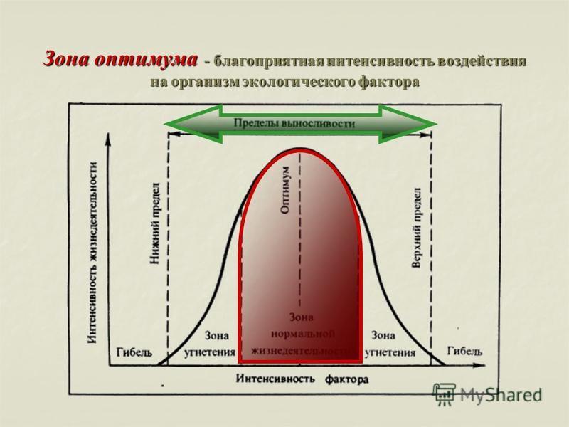 Зона оптимума - благоприятная интенсивность воздействия на организм экологического фактора
