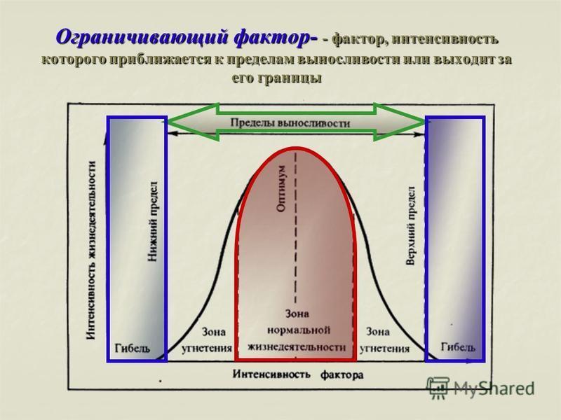 Ограничивающий фактор- - фактор, интенсивность которого приближается к пределам выносливости или выходит за его границы