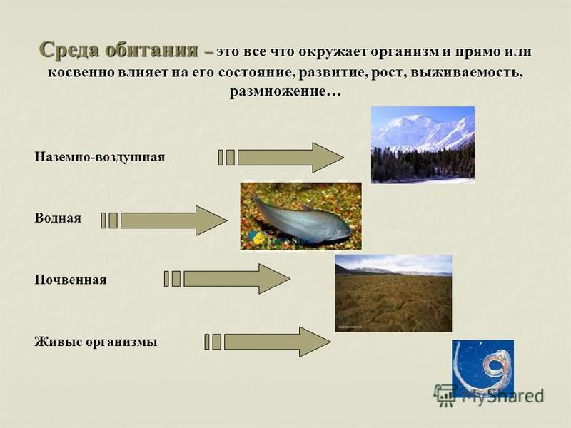 Среда обитания – это все что окружает организм и прямо или косвенно влияет на его состояние, развитие, рост, выживаемость, размножение… Наземно-воздушная Водная Почвенная Живые организмы
