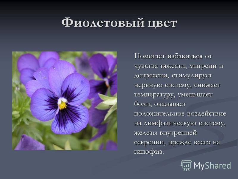 Фиолетовый цвет Помогает избавиться от чувства тяжести, мигрени и депрессии, стимулирует нервную систему, снижает температуру, уменьшает боли, оказывает положительное воздействие на лимфатическую систему, железы внутренней секреции, прежде всего на г