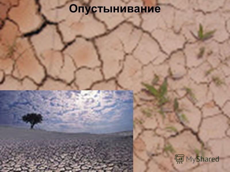 Опустынивание