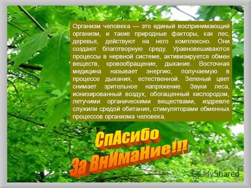 Организм человека это единый воспринимающий организм, и такие природные факторы, как лес, деревья, действуют на него комплексно. Они создают благотворную среду. Уравновешиваются процессы в нервной системе, активизируется обмен веществ, кровообращение