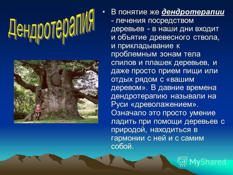 В понятие же дендротерапии - лечения посредством деревьев - в наши дни входит и объятие древесного ствола, и прикладывание к проблемным зонам тела спилов и плашек деревьев, и даже просто прием пищи или отдых рядом с «вашим деревом». В давние времена