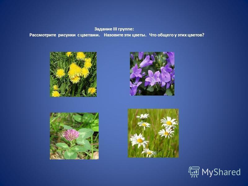 Задание III группе: Рассмотрите рисунки с цветами. Назовите эти цветы. Что общего у этих цветов?