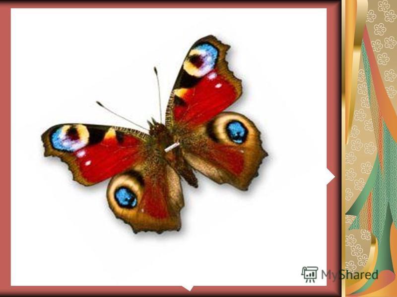 С тех пор все жили счастливо. А бабочка теперь радует всех своей красотой.