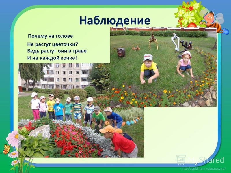 http://goldina-myclas.ucoz.ru/ Наблюдение Почему на голове Не растут цветочки? Ведь растут они в траве И на каждой кочке!