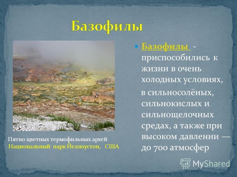 Базофилы - приспособились к жизни в очень холодных условиях, Базофилы в сильносолёных, сильнокислых и сильнощелочных средах, а также при высоком давлении до 700 атмосфер Пятно цветных термофильных архей Национальный парк Йеллоустон, США