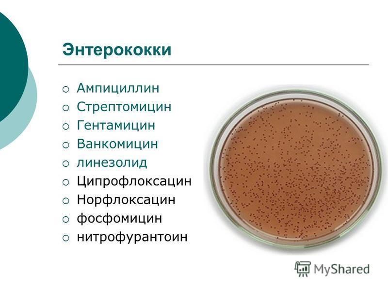 Энтерококки Ампициллин Стрептомицин Гентамицин Ванкомицин линезолид Ципрофлоксацин Норфлоксацин фосфомицин нитрофурантоин
