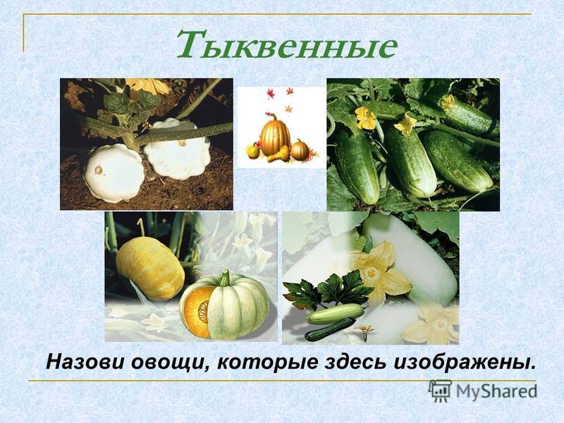 Тыквенные Назови овощи, которые здесь изображены.