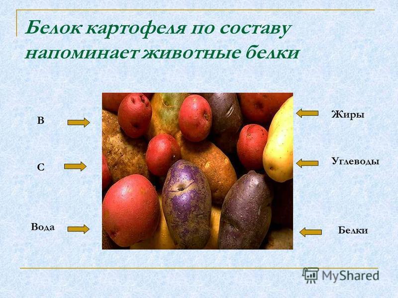 Белок картофеля по составу напоминает животные белки Жиры Углеводы Белки В С Вода