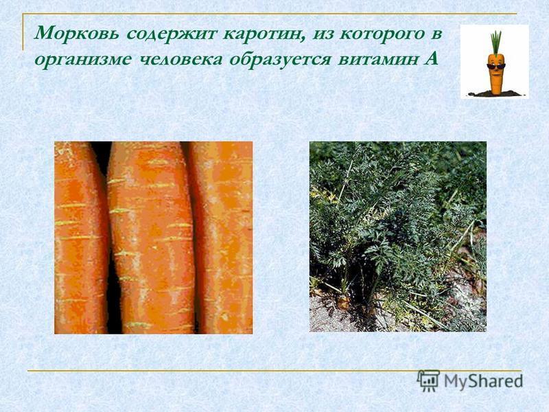 Морковь содержит каротин, из которого в организме человека образуется витамин А