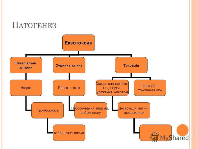 П АТОГЕНЕЗ Екзотоксин Епітеліальні клітини Некроз Тромбокіназа Фібринозна плівка Судинна стінка Парез стаз Просочування плазмы, фібриногену Токсемія Серце, наднирники, НС, норки, ураження капілярів Деструкція клітин, крововиливи ССН Інфекційно- токси