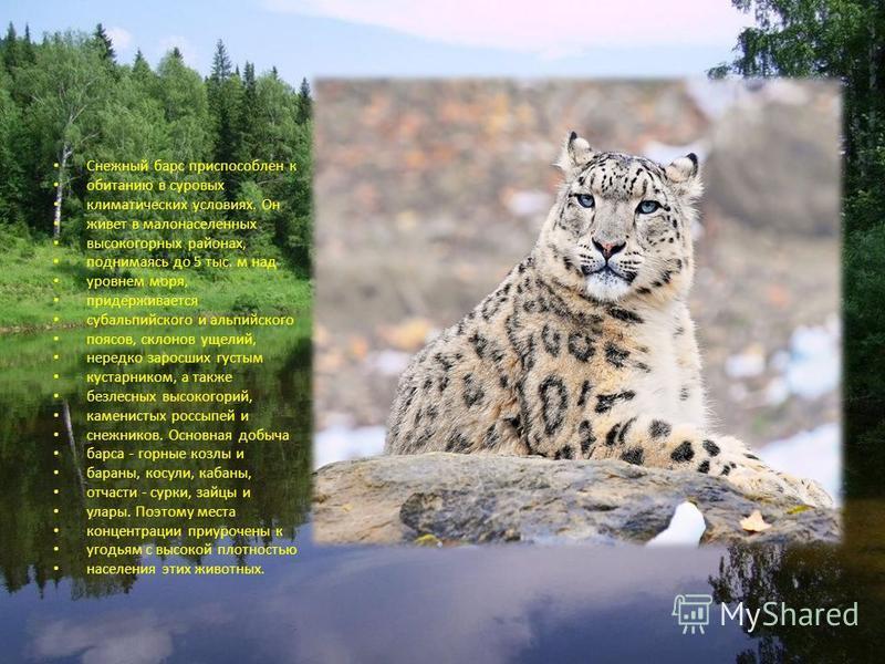 Снежный барс приспособлен к обитанию в суровых климатических условиях. Он живет в малонаселенных высокогорных районах, поднимаясь до 5 тыс. м над уровнем моря, придерживается субальпийского и альпийского поясов, склонов ущелий, нередко заросших густы