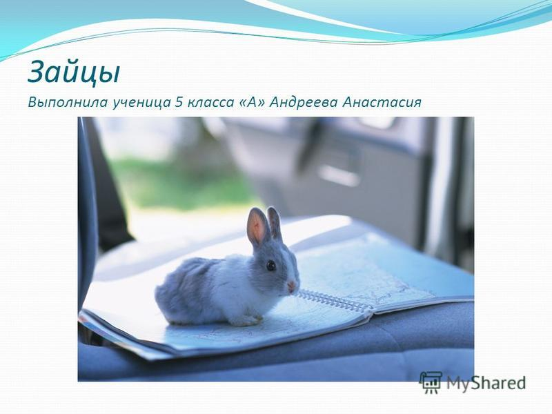 Зайцы Выполнила ученица 5 класса «А» Андреева Анастасия