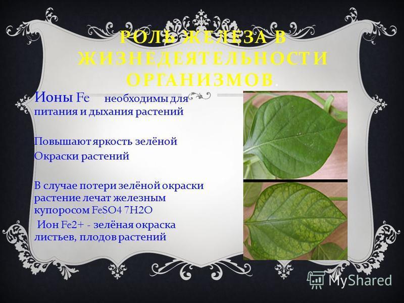 РОЛЬ ЖЕЛЕЗА В ЖИЗНЕДЕЯТЕЛЬНОСТИ ОРГАНИЗМОВ. Ионы Fe необходимы для питания и дыхания растений Повышают яркость зелёной Окраски растений В случае потери зелёной окраски растение лечат железным купоросом FeSO4 7H2O Ион Fe2+ - зелёная окраска листьев, п