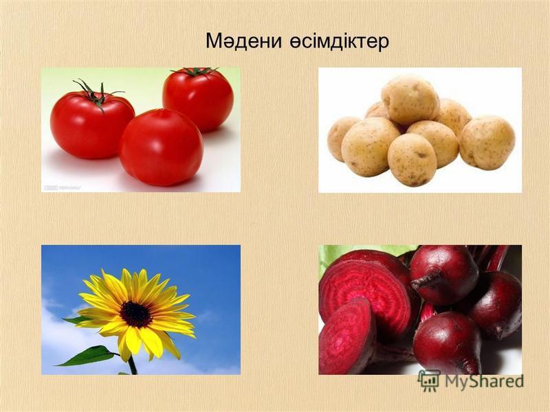 Мәдени өсімдіктер