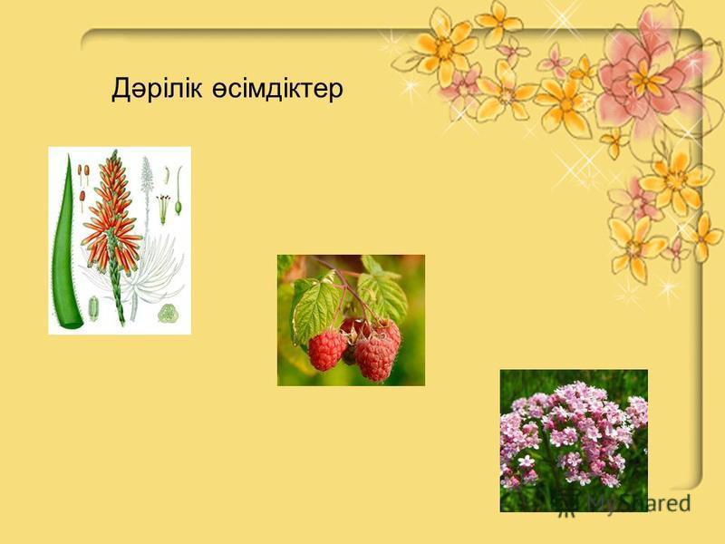 Дәрілік өсімдіктер
