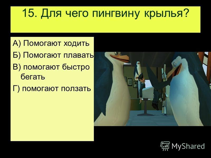 15. Для чего пингвину крылья? А) Помогают ходить Б) Помогают плавать В) помогают быстро бегать Г) помогают ползать