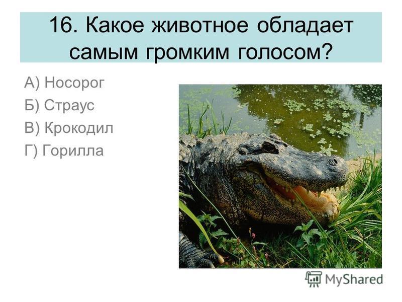 16. Какое животное обладает самым громким голосом? А) Носорог Б) Страус В) Крокодил Г) Горилла