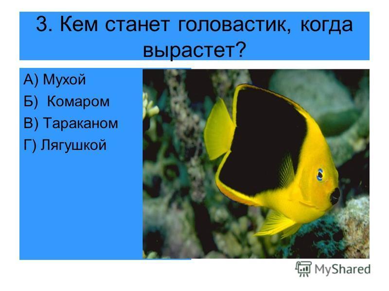 3. Кем станет головастик, когда вырастет? А) Мухой Б) Комаром В) Тараканом Г) Лягушкой