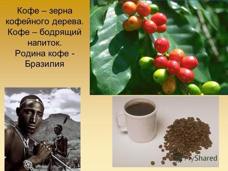 Кофе – зерна кофейного дерева. Кофе – бодрящий напиток. Родина кофе - Бразилия