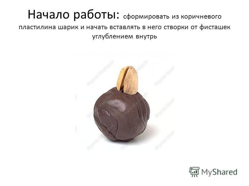 Начало работы: сформировать из коричневого пластилина шарик и начать вставлять в него створки от фисташек углублением внутрь