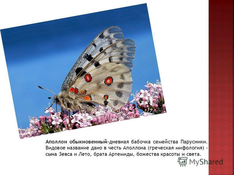 Аполлон обыкновенный-дневная бабочка семейства Парусники. Видовое название дано в честь Аполлона (греческая мифология) - сына Зевса и Лето, брата Артемиды, божества красоты и света.