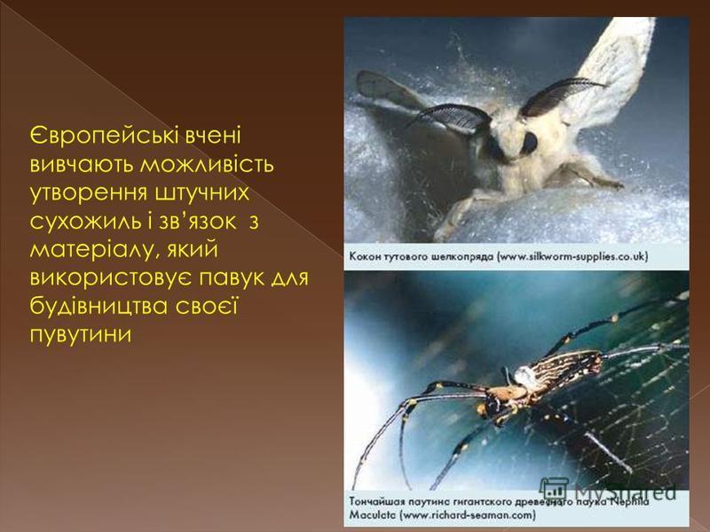 Європейські вчені вивчають можливість утворення штучних сухожиль і звязок з матеріалу, який використовує павук для будівництва своєї пувутини