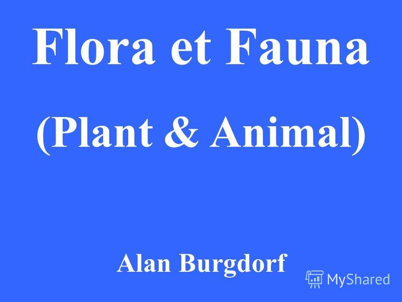 Flora et Fauna (Plant & Animal) Alan Burgdorf