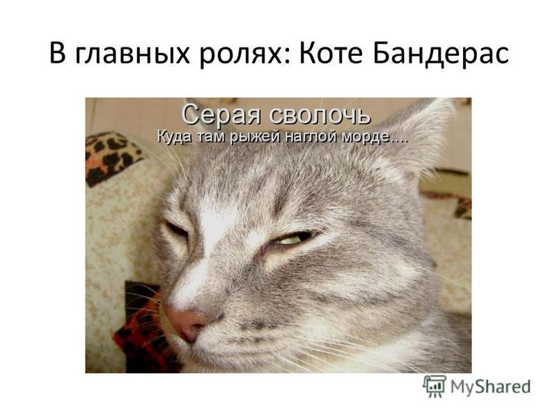 В главных ролях: Коте Бандерас