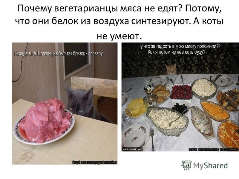 Почему вегетарианцы мяса не едят? Потому, что они белок из воздуха синтезируют. А коты не умеют.